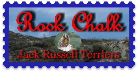 Welcome to Roch Chalk Jack Russell Terriers